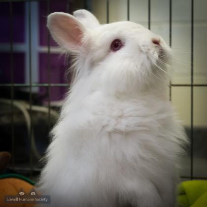 Rescue a rabbit (Jane Blatz)